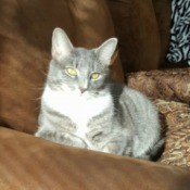 What Breed Is My Cat? - grey tabby colored cat