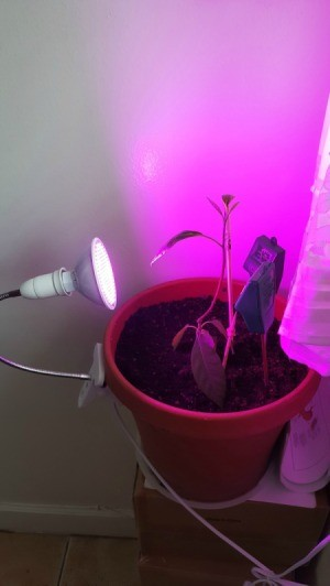 Using an LED Bulb as a Grow Light
