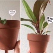 Valentine's Day Plant Stake - two gift plants