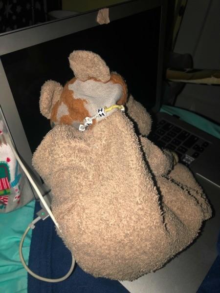 Identifying a Stuffed Lion