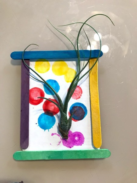 Making a Hanging Air Plant Frame - stick air plant to the tape roll