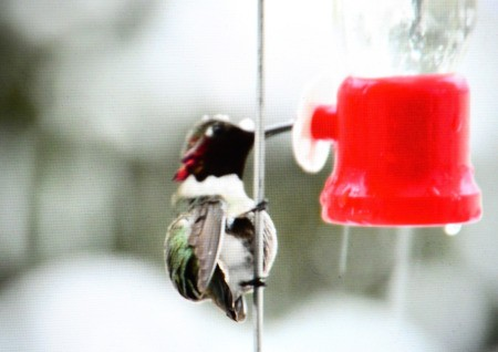 A hummingbird at a feeder in the snow.