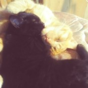 Peanut Butter-n-Jelly and Lilah Mae (Cats)