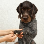 Foot Care for Your Dog - cleaning a dog's foot