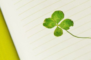 A four leaf clover being pressed in a journal.