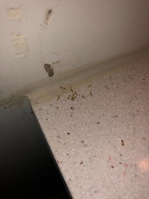 Identifying Bugs that Hatched in the Bathroom - bugs on sink counter top