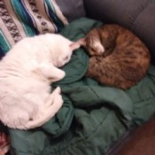 Two cats asleep on an armchair.
