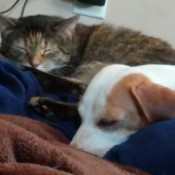 Unexpected Best Friends (Nala and Gwen) - sleeping cat and dog