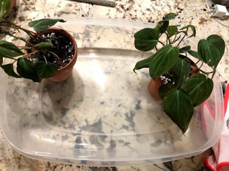 Repotting Plants Inside your House - potted plants sitting in a plastic container