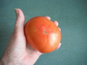 Make a Little Hothouse for Early Tomatoes - large red tomato
