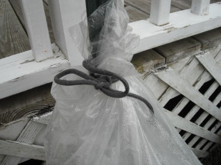 Make a Little Hothouse for Early Tomatoes - tie a clear trash bag to the metal post