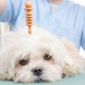 A holistic vet using a pendulum on a depressed dog.