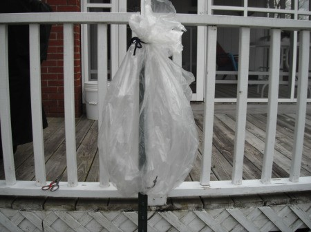 Make a Little Hothouse for Early Tomatoes - when the bag is raised tie to the pole