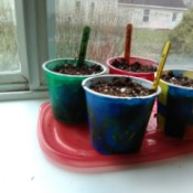 Up-cycled Seedling Pots - planted yogurt cups