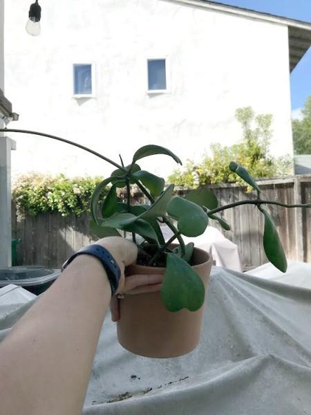 Make Your Own Houseplant Trellis - droopy/leggy houseplant