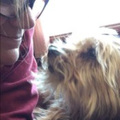 In Memory of Happy (Yorkshire Terrier) - person holding Happy