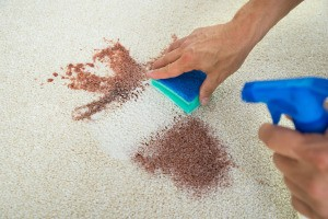 Hands cleaning a stain on a carpet.