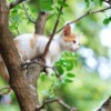 A young cat high up in a tall tree.