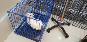 Recovery Time for Parvo - puppy on IV in crate