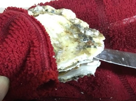 splitting Oyster shell with knife