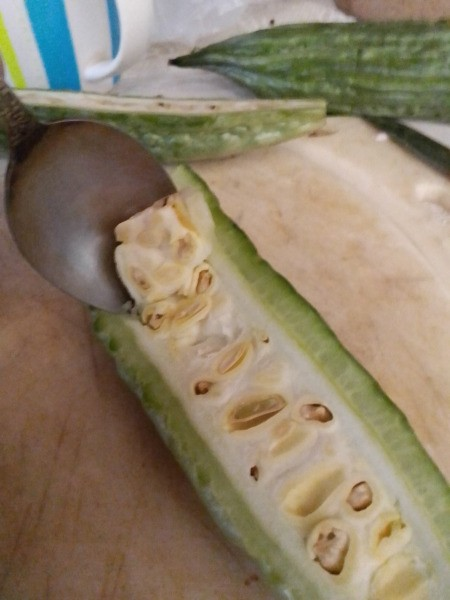 scrapping seeds from ampalaya