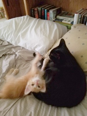 Introducing a New Kitten to Your Resident Cat
