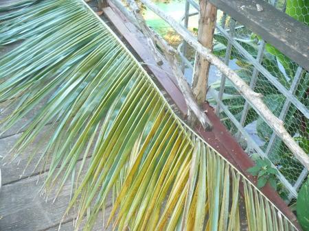 Weaving Coconut Leaf Plates - coconut palm leaf
