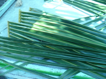 Weaving Coconut Leaf Plates - cut the leaves in half and remove some of the excess stem