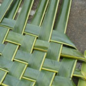 Weaving Coconut Leaf Plates - repeat