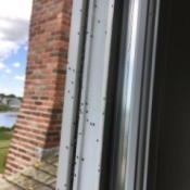 Identifying Small Black Insects - on window frame