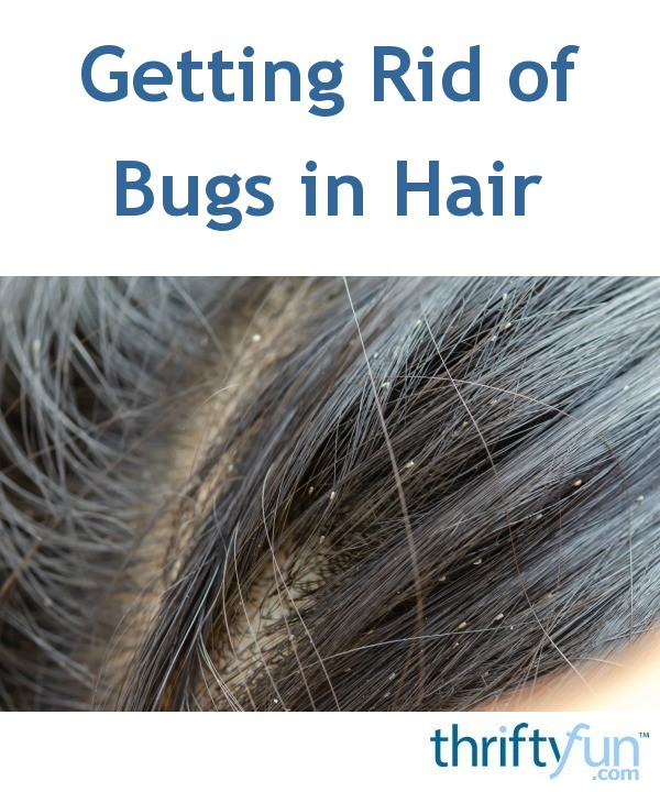 Getting Rid of Bugs in Hair | ThriftyFun