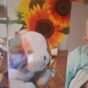 Identifying a Stuffed Puppy - photo of a stuffed dog