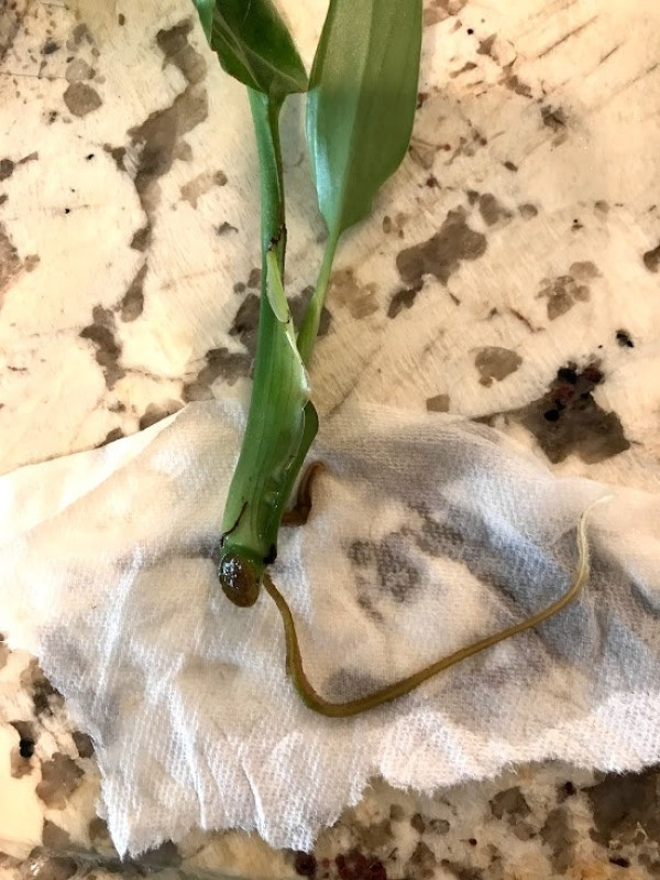 How to Ship Plant Cuttings