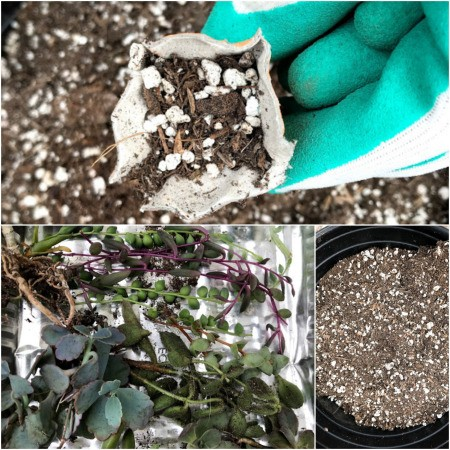 Making Mini Egg Carton Planters - add soil and plant cutting of your choice