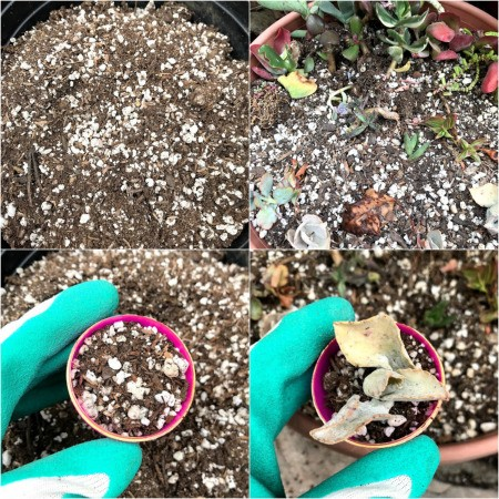 Upcycled Plastic Egg Mini Planter -add soil and succulent