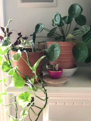 Upcycled Plastic Egg Mini Planter - planter on mantle with other houseplants