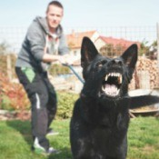 An aggressive dog on a leash.