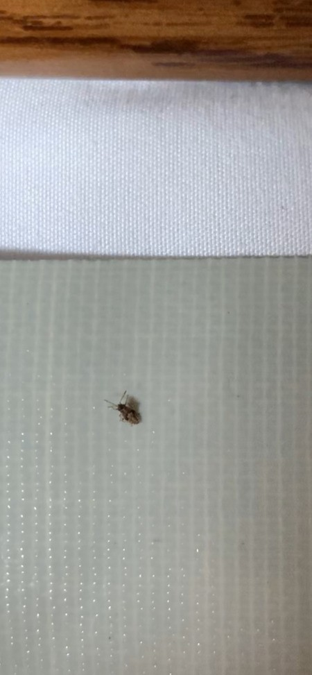 What Kind of Bug Is This?