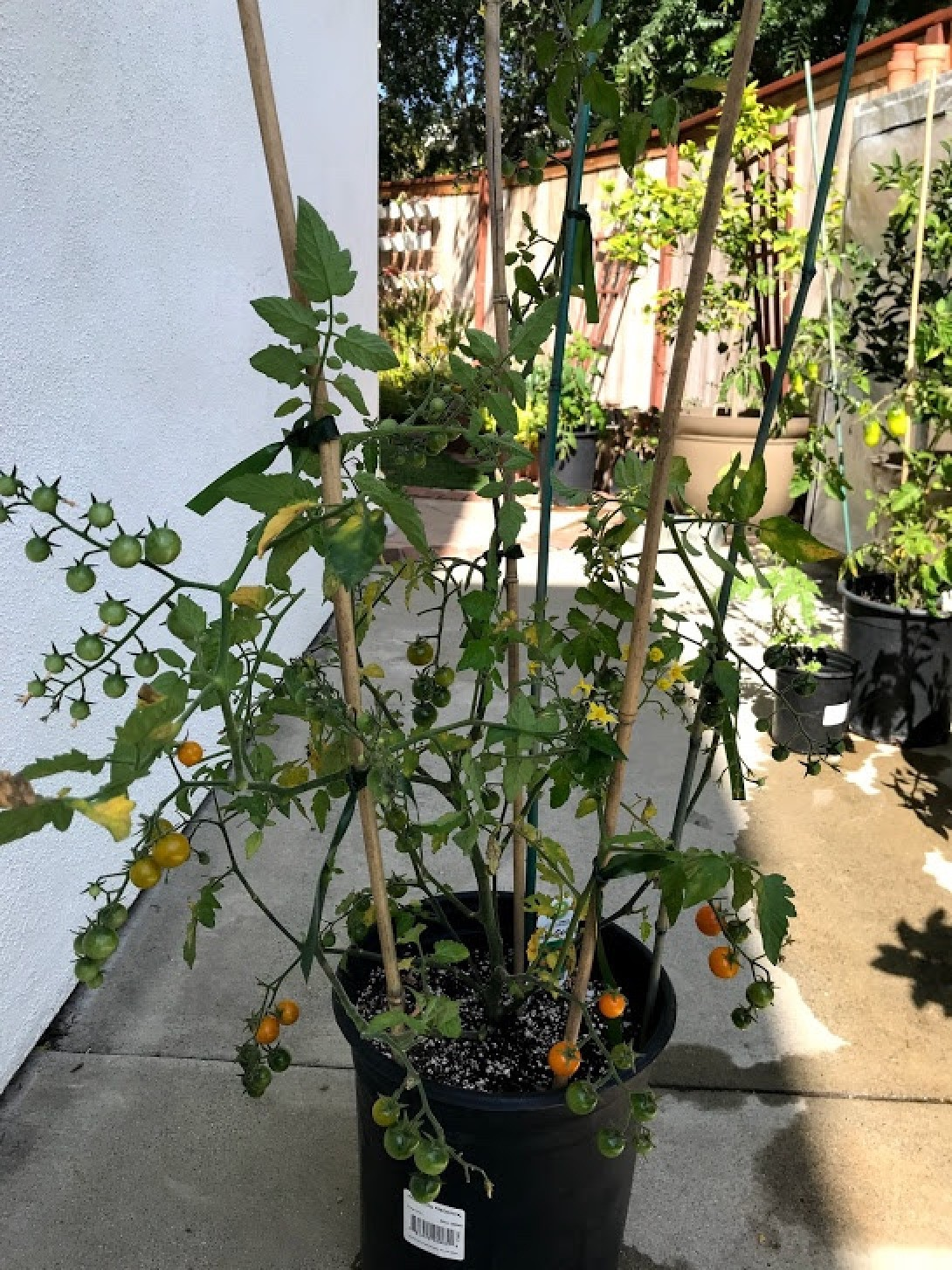 Bamboo Sticks for Plant Support   ThriftyFun