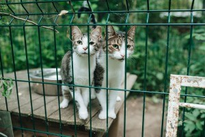 Two cats in an enclosure.
