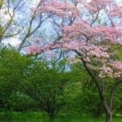 Spring trees in bloom in a park.
