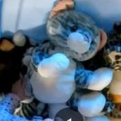 Identifying a Stuffed Toy - stuffed kitty