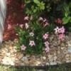 Identifying a Garden Plant