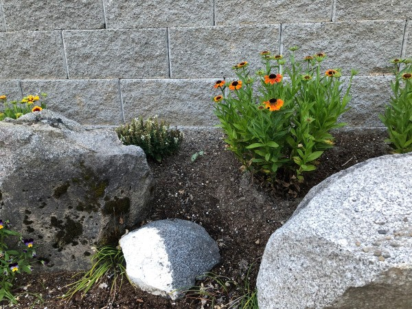 My June Garden - granite boulders left over from the original slope down to short retaining wall