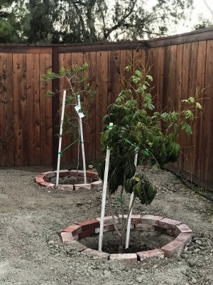PVC Pipe as Garden Support/Stake - PVC tree supports