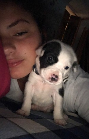 What Breed Is My Dog? - girl and black and white puppy