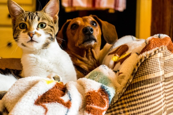 cat and dog together in pet bed