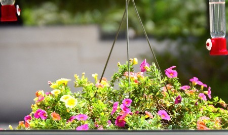 Floating Flower Bed for the Hummingbirds