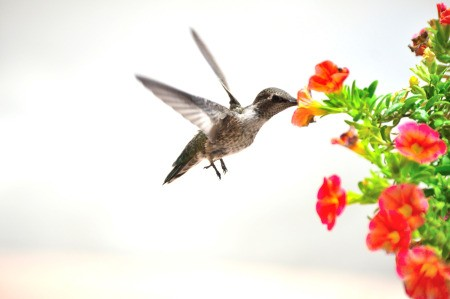 Floating Flower Bed for the Hummingbirds - hummingbird and hanging flower basket