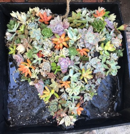 Heart Succulent Wreath - a variety of colors and shapes fill the heart planter
